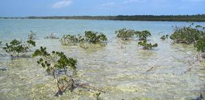 big_040222-Bahamas-Abaco-Purka-Channel.html