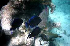 big_990330-mexico-pdc-snorkling2.html