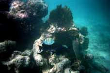 big_990330-mexico-pdc-snorkling3.html