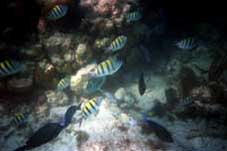 big_990330-mexico-pdc-snorkling5.html